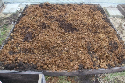 I added some horse manure to feed the soil again