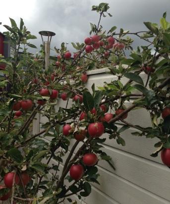 Apple_2014-08-16