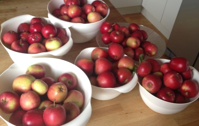 Apple_2014-08-31